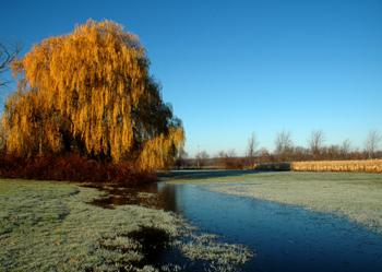 willowmorning