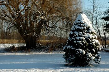 Fireflys Gumdrop Tree in Snow