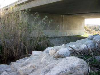 The Underpass Firefly Used to Find the LA River