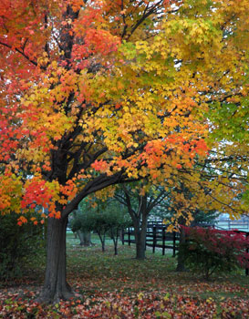 Beautiful fall colors at Fireflys Place in Western New York