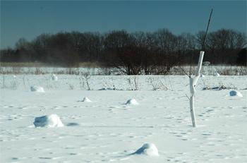 God left snowballs on fireflys lawn