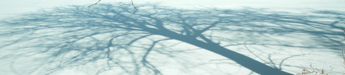 pretty tree shadow in the snow on fireflys farm