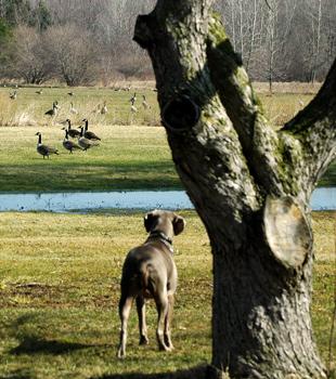 Blu begins to notice the geese