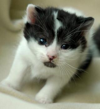 Dear little Yang kitten on Fireflys farm