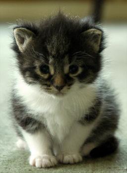 Sweet little Yin the kitten on Fireflys farm