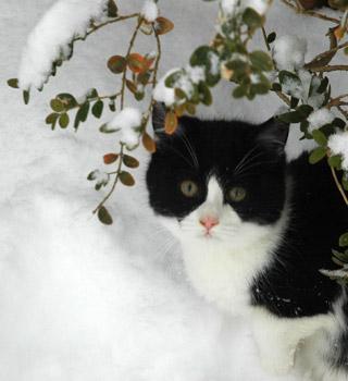 newyear09_cat2