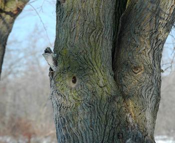 17feb09_tree