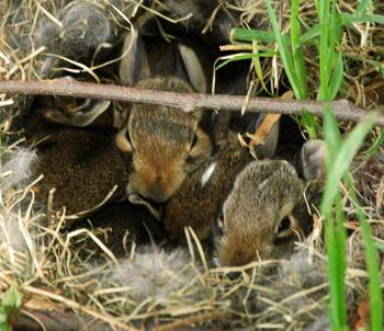 20may09_bunnies