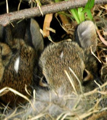 20may09_bunnies3