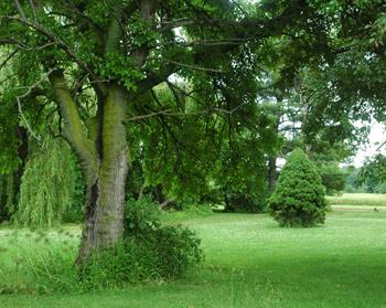 green-yard