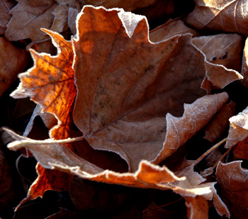frostyleaves3